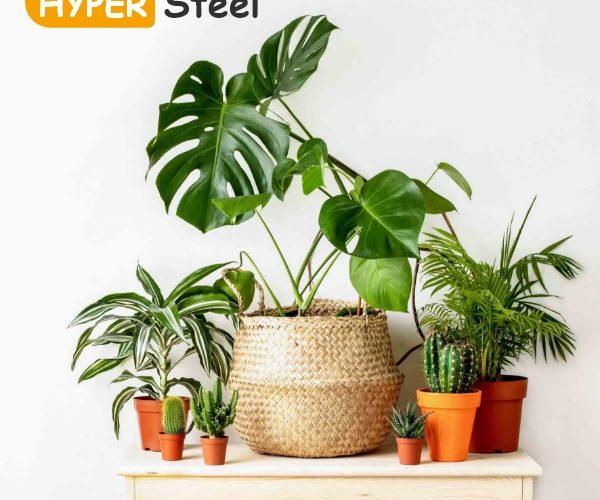 تاثیر گیاهان در منزل